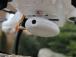 Dron Skywatcher PRO FPV + hliníkový kufr