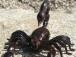 RC Škorpion, černý